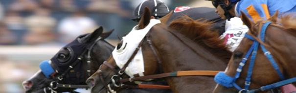 picture of horses at Del Mar Race Tarck - Del Mar New Homes